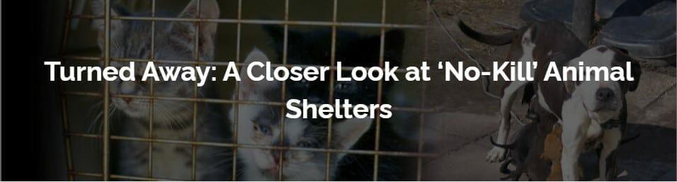 a closer look at no kill animal shelters