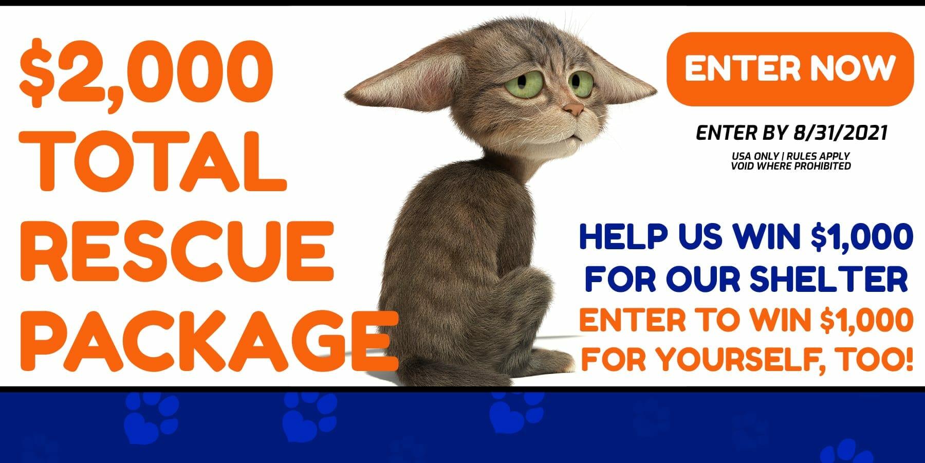 adopt a pet cat