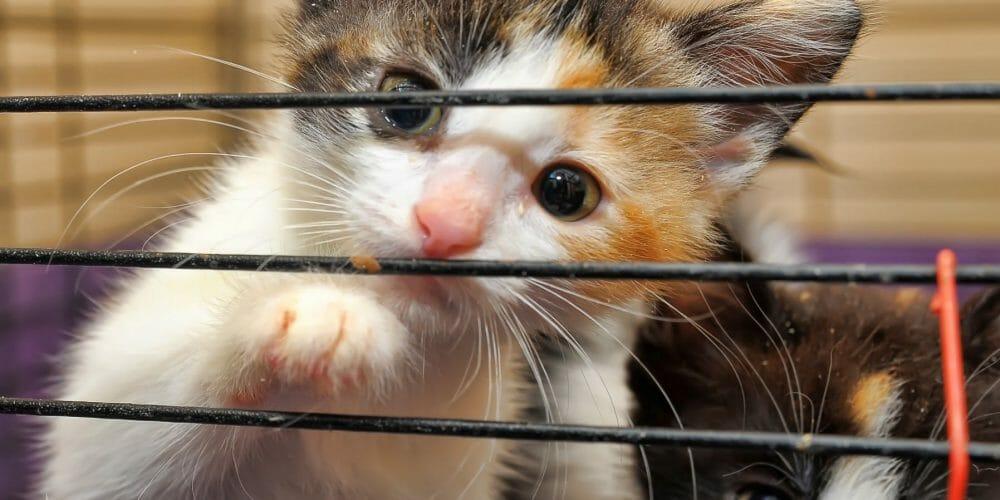 adopt kitten shelter