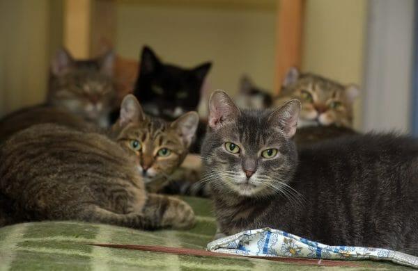 adopt senior cat shelter