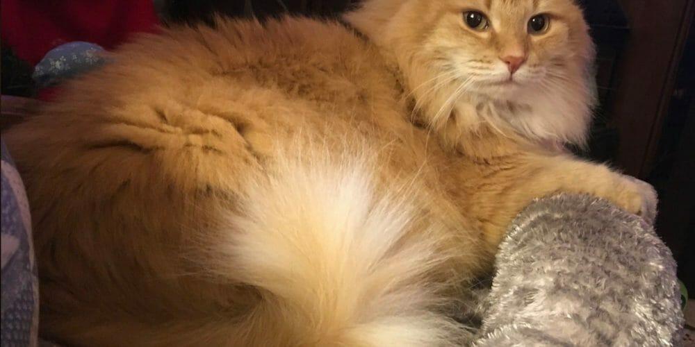 Sonny Cute Cat Winner July 2020