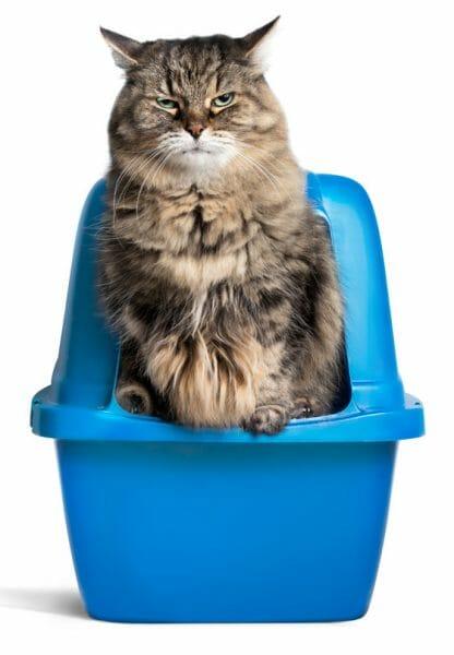 cat diabetes - symptoms of diabetes in cats