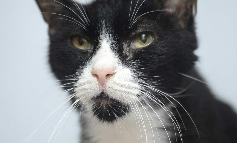 Cat FIV
