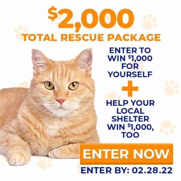 charitable cat owner and rescue donation