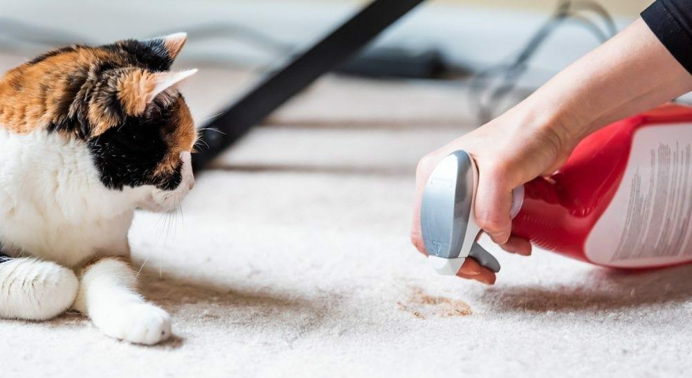 cat spray - cat spraying smell