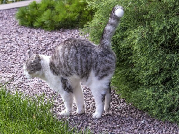 cat spraying - how to stop a cat from spraying
