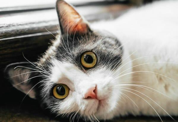 cat upper respiratory infection symptoms