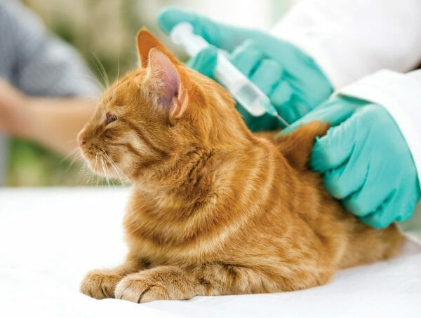 cats with diabetes - signs of diabetes in cats