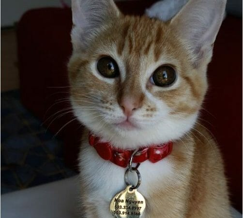 cute ginger orange cat picture