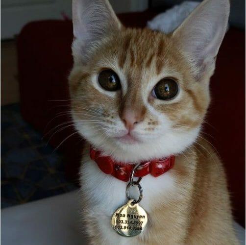 cute ginger orange cat picture
