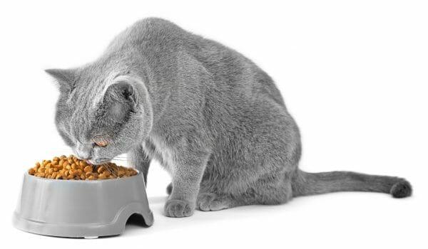 diabetic cat food - food for diabetic cats