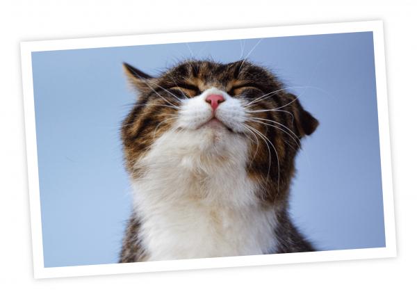 enter-my-pet-smiling-cat
