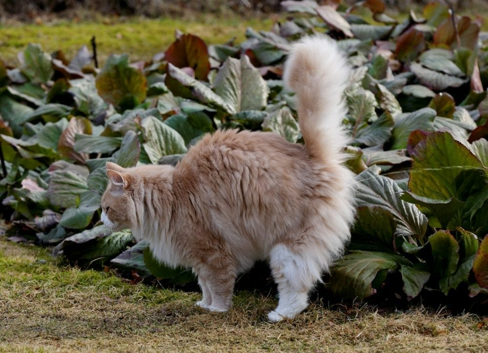 female cat spraying - stop cat spraying