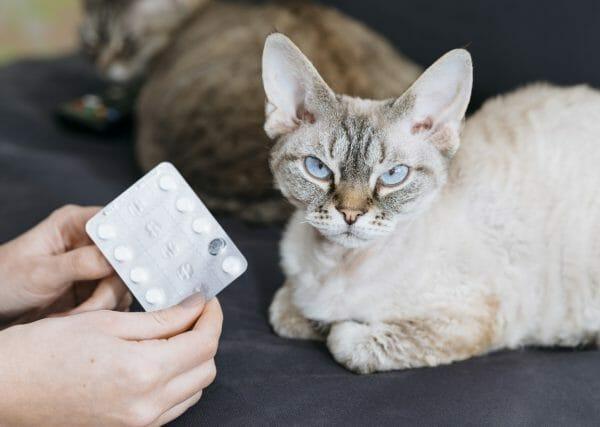 hyperthyroidism in cats treatment - hyperthyroidism in cats medication