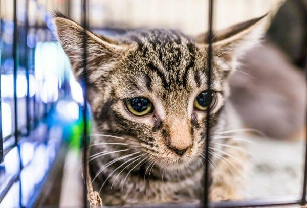 no kill cat shelters usa