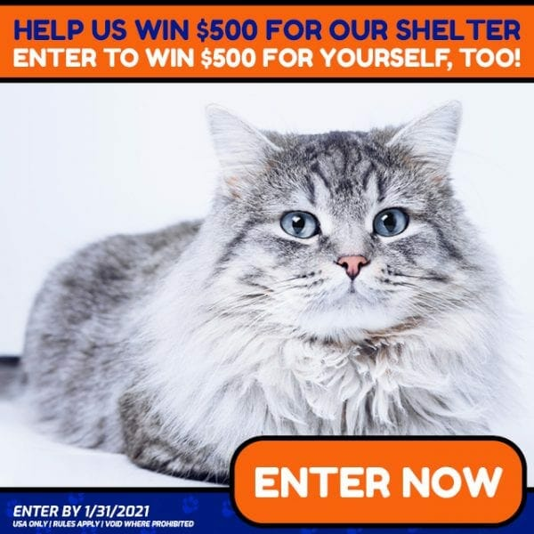 Non Profit Animal Organizations Donation Giveaway for Cats Kittens