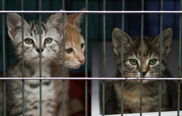 rescue kittens homeless kill shelter