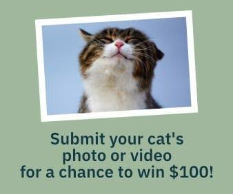 cat photo contest
