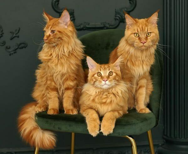 symptoms of feline leukemia - feline leukemia contagious